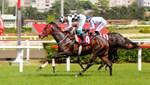 At yarışları, yeniden başladı